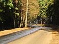 Pludi druvciema 2011 - panoramio (49).jpg