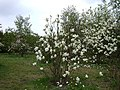 Poland. Warsaw. Powsin. Botanical Garden 048.jpg