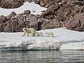 Polar Bear Mother and Cubs.jpg