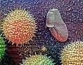 Pollen on scanning electron microscope.jpg
