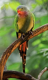 Are birds in your nature? Join us at BirdLife Australia.