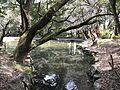 Pond of Miyazaki Shrine 3.jpg