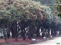 Pontevedra-Regando camelios.jpg