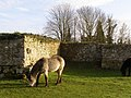 Pony grazing at St Leonards Grange, Beaulieu Estate - geograph.org.uk - 346843.jpg