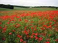 Poppy field in Plumford Road in the early summer of '07 - geograph.org.uk - 607088.jpg