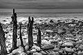 Porlock Weir - panoramio (2).jpg