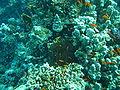 Port Ghalib march 2006-0129.jpg