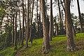 Preacher's Grove Trail - Itasca State Park, Minnesota (34527960794).jpg