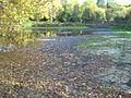 Priory Gardens pond - geograph.org.uk - 740913.jpg