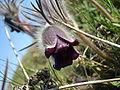 Pryingul flora1.JPG