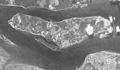 Pulau Ubin 19650327 DS1018-1022DA052 c.jpg
