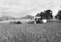 Queensland State Archives 4107 Harvesting wheat Campbells Plains Darling Downs c 1930.png