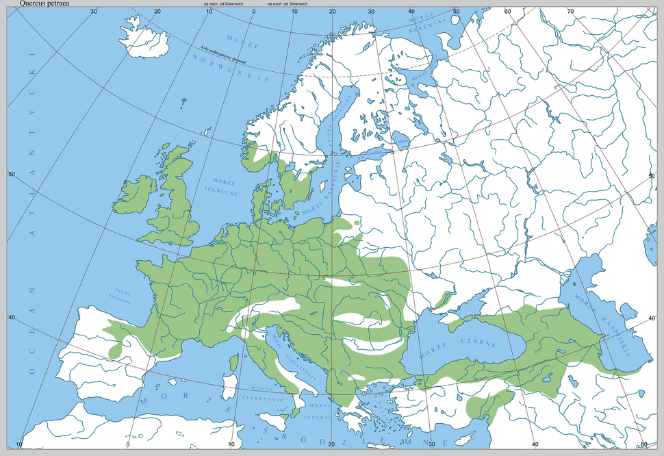Quercus petraea - range in Europe by Boratynski