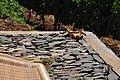 Quinta das Vinhas ^ Cottages, Estreito da Calheta, Madeira, Portugal, 1 July 2011 - Papaya with lizards - panoramio.jpg