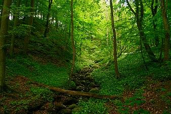 Rövarekulan Forest 2.jpg
