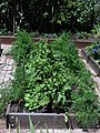 Raised Redwood Gardenbeds 13.jpg