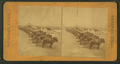 Ready for plowing with a pair of horses, from Robert N. Dennis collection of stereoscopic views.png