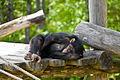 Resting (7296183116).jpg