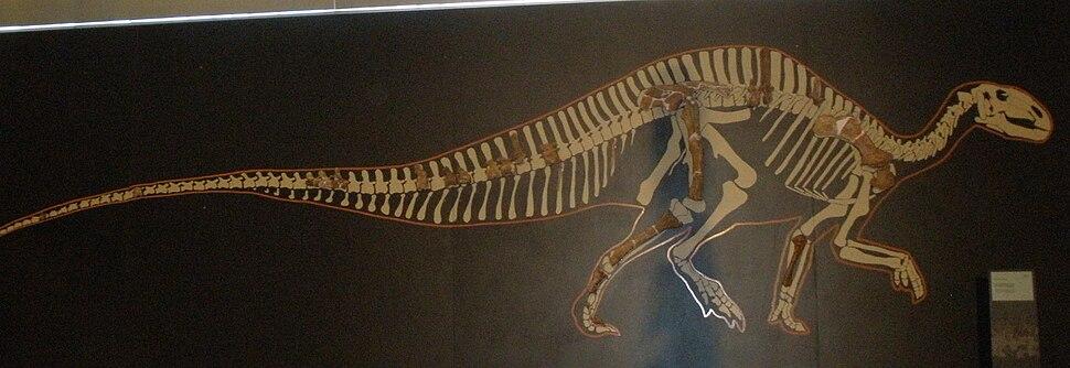 Rhabdodon priscus