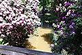 Rhododendronpark Bremen 20090513 035.JPG