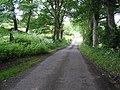 Road at Cavanreagh - geograph.org.uk - 850678.jpg