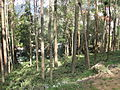 Road view to and from OOTY (211).JPG