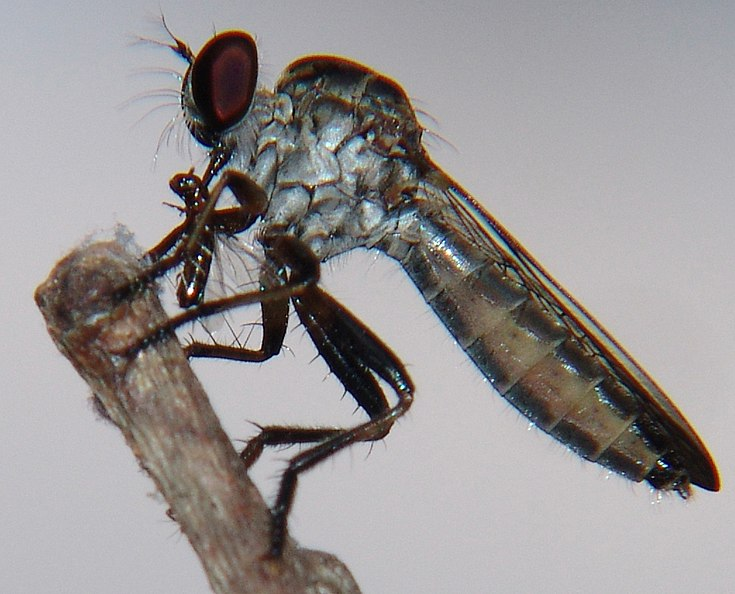 C.O.W. - #087: Razor Fly