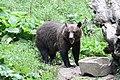 Romania bear (44158237291).jpg