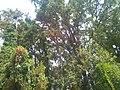 Romanian Beach Trees.jpg