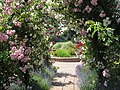 Rose Arch at RNRS gardens of the Rose.JPG