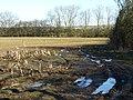 Rotten Crops - geograph.org.uk - 1730646.jpg