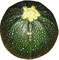Round zucchini.jpg