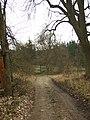 Ruda, Pilský rybník, cesta k rybníku.jpg