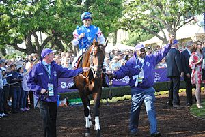 Runhappy - Runhappy at the 2016 Breeders' Cup