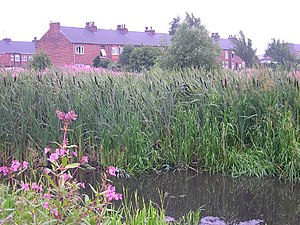 Rushes at the end of Pottery Street, Castleford.