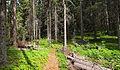 Sallaajärvi nature trail4.jpg