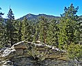 San Jacinto State Forest, CA 2-7-14 (16306536690).jpg