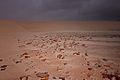 Sand Dune, Socotra Island (13887342397).jpg
