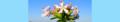 Saponaria officinalis. Reader-2.png