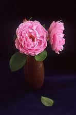 Sarah van Fleet rose.jpg