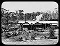 Sawmill, Coffs Harbour (5040636850).jpg