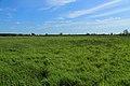 Schale Naturschutzgebiet Wehrstroot 07.JPG
