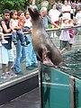 Sea lion, Central Park Zoo.jpg