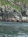 Sea lions at Cape St James (26923671914).jpg