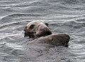 Seals2 (1794434322).jpg