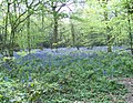 Selsdon Wood Bird Sanctuary - geograph.org.uk - 931866.jpg