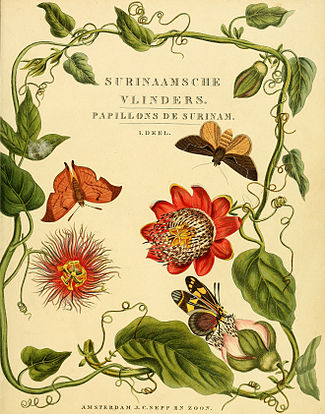 Sepp-Surinaamsche vlinders - Title page.jpg