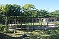 Seto Toso Park wisteria shelf ac.jpg
