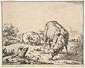 Sheep, from a set of 16 plates MET DP828265.jpg