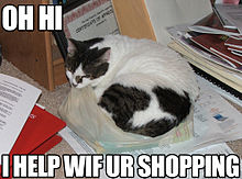 Shopping lolcat.jpg